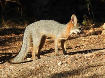 Side view of Redd Foxx
