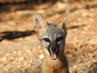 Redd Foxx saying hello!