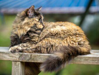Pepper kitty enjoying the sunshine