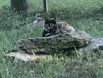 Pepper the kitty posing on a rock in the yard