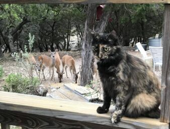 Pepper the cat photobombing the picture of deer